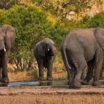 stockvault-kruger-park-elephants133551
