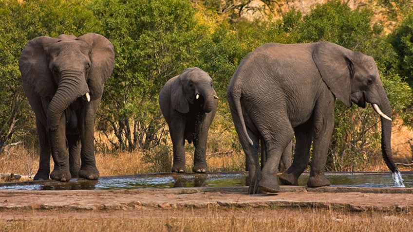 HOPE Anti Poaching World Elephant Day Shows Trophy Hunting As
